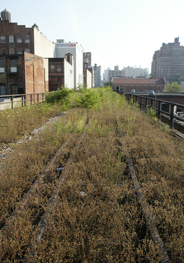 On Top of the High Line